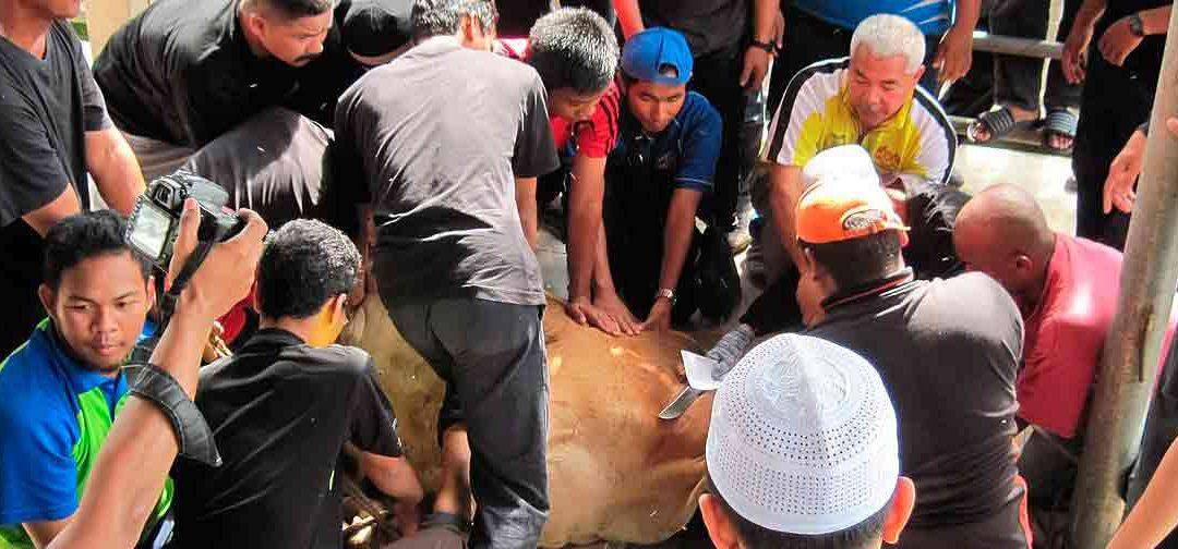 Eid al Adha : Celebraciones y festividades en India