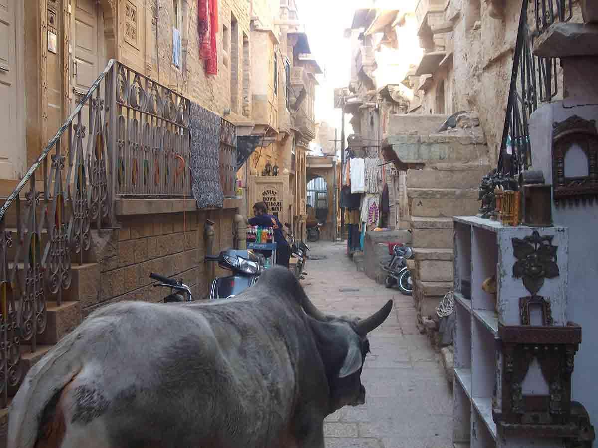 Vaca dentro del Fuerte de Jaisalmer