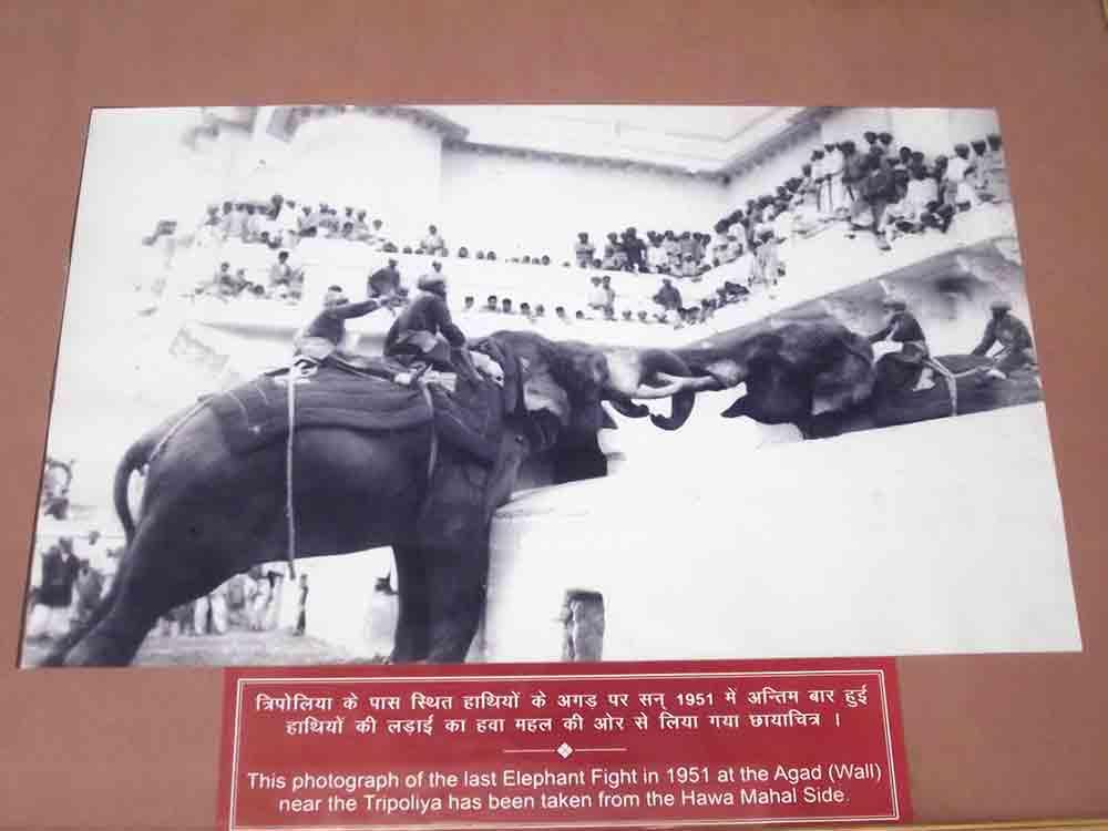 Foto de Pelea de elefantes