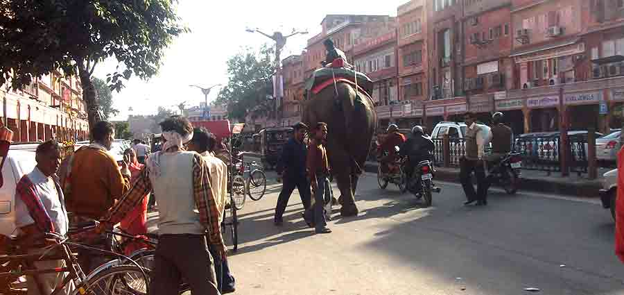 Calle en Jaipur con un elefante