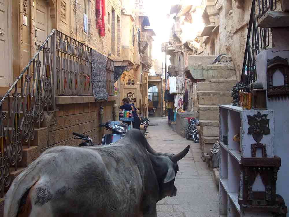 Vaca en calle de Jaisalmer