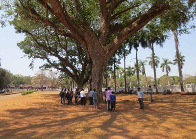 Gente bajo en un árbol
