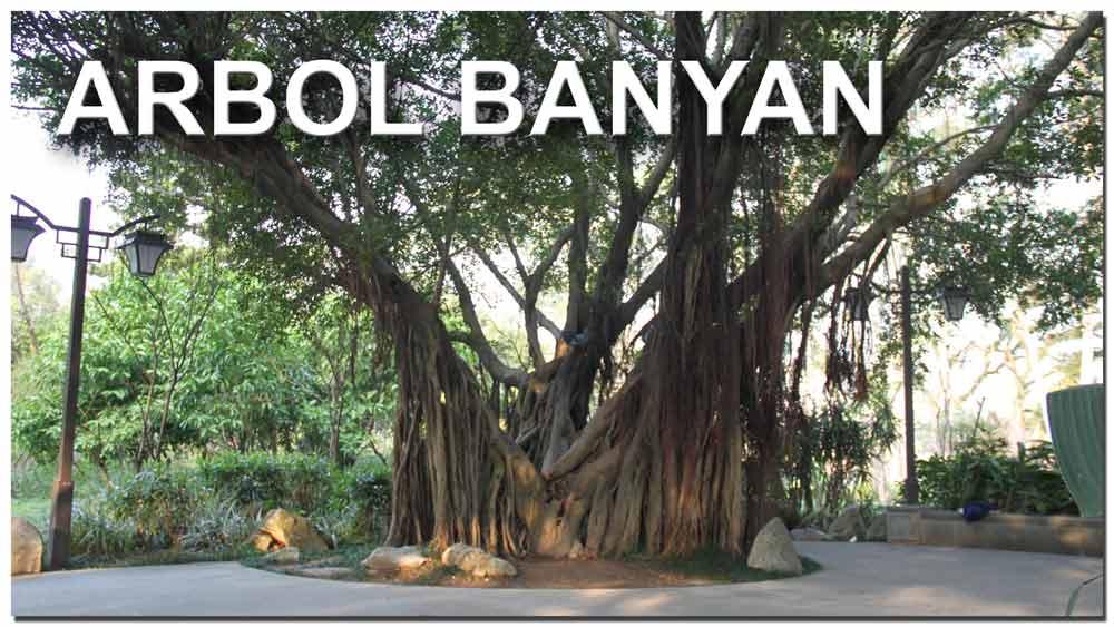 Árbol de Banyan